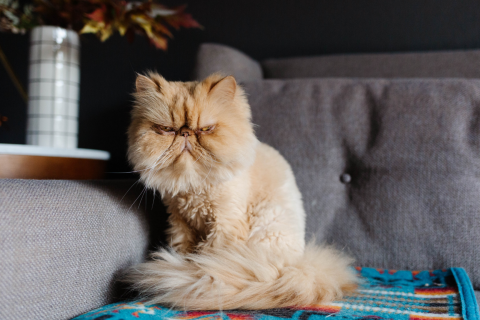 Got Clean Cat Pee on Your Couch - The Zerorez® guide on how to clean a couch, cat pee